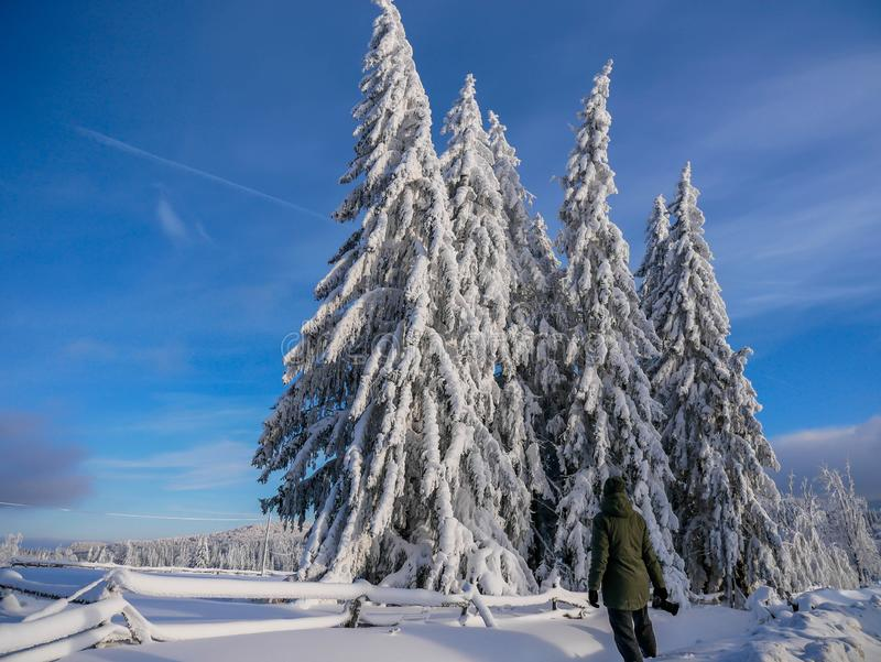 Fotógrafo unidentifiable novo que admira os pinheiros cobertos com a neve fotos de stock