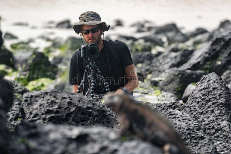 Fotógrafo y turista de la fauna en las Islas Galápagos que toman la foto de Marine Iguana foto de archivo