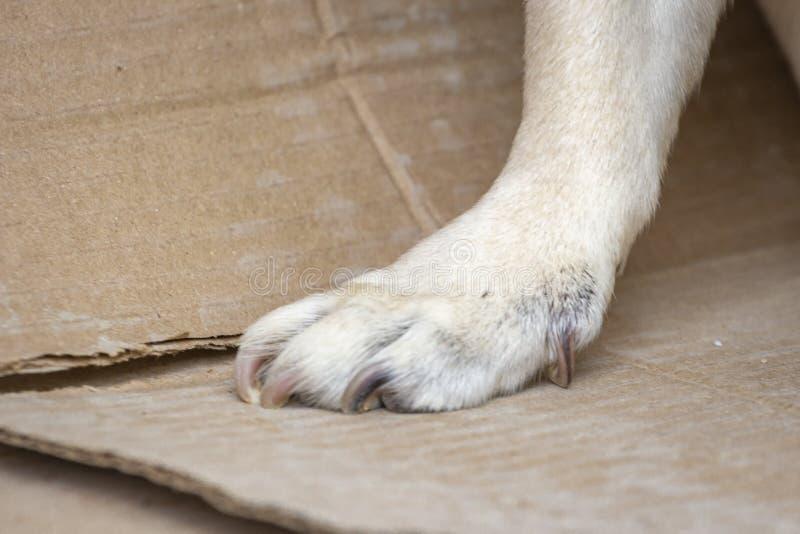 Fot av hunden royaltyfria bilder