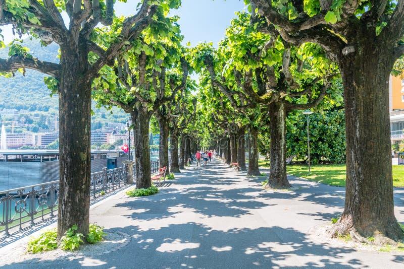 Fot- gränd mellan träden nära sjön Lugano Lago di Lugano arkivfoto