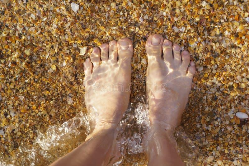 Fot i det kristallklara havsvattnet Det nedersta skalet fotografering för bildbyråer