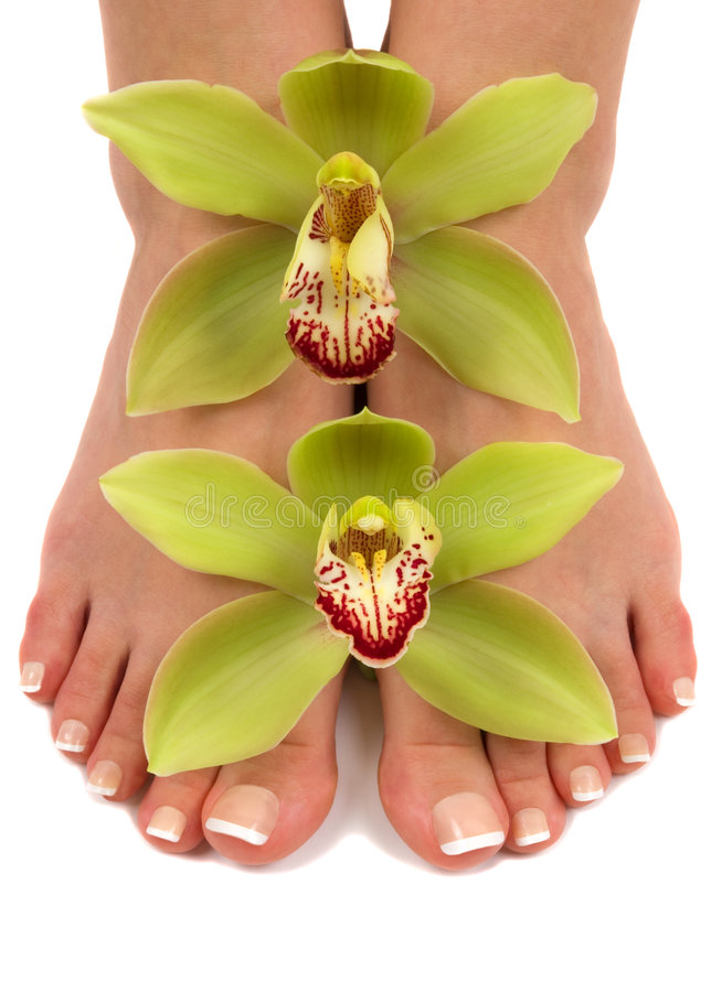 fot orchids arkivfoton