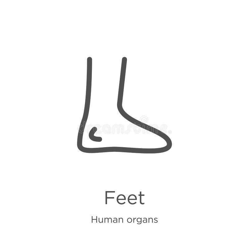 fot symbolsvektor från samling för mänskliga organ Tunn linje illustration för vektor för fotöversiktssymbol Översikt tunn linje  royaltyfri illustrationer