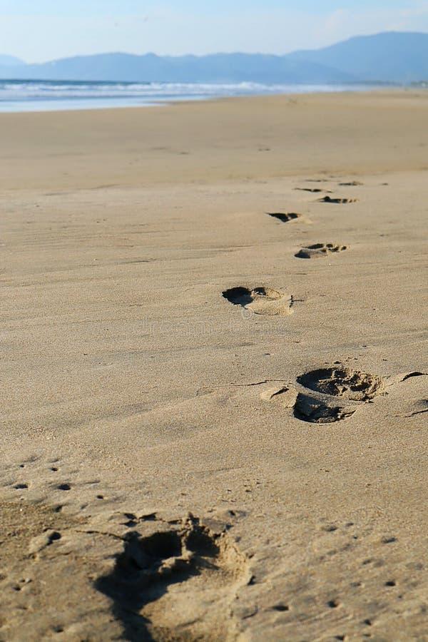 Fotavtryck i sanden på en ökenstrand i Mexiko arkivbild