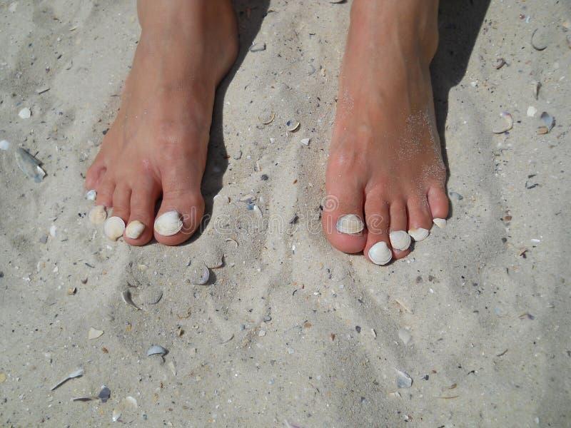 Foten på sand med skalet spikar arkivbild