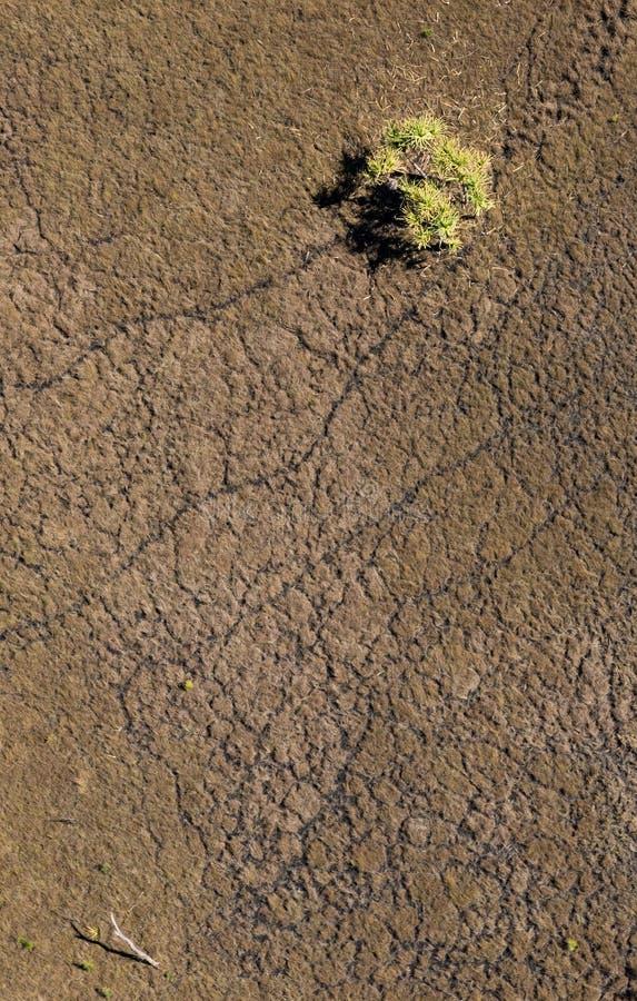 Foto aérea de la línea de palma del pandanus en prado imagen de archivo