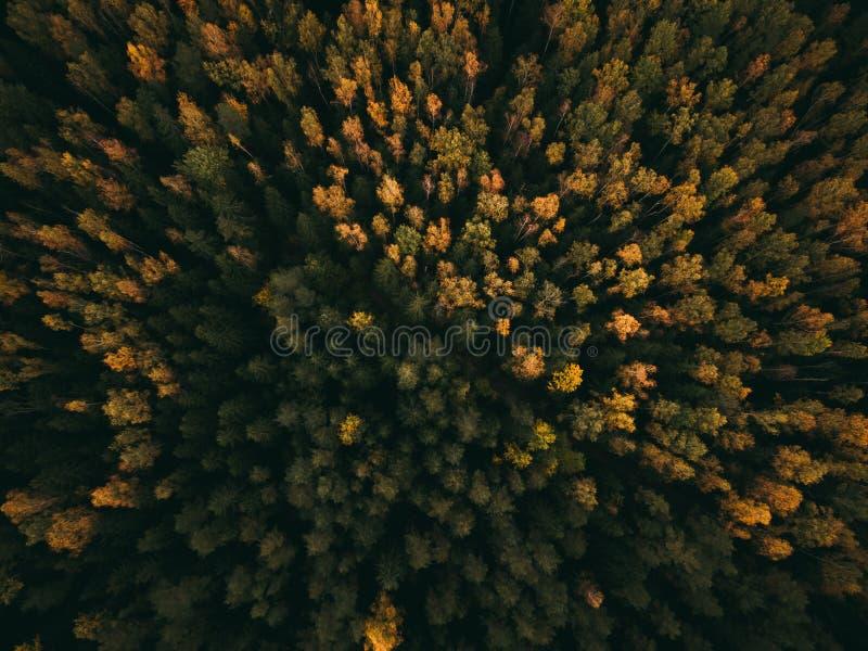 Foto aérea de un bosque coloreado en otoño imagen de archivo