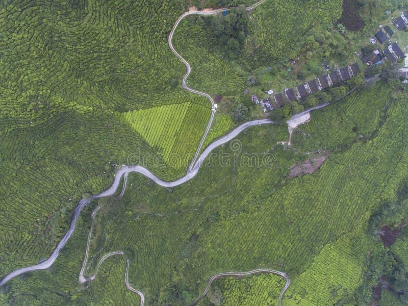 Foto aérea - vista aérea da plantação de chá na manhã enevoada fotos de stock royalty free