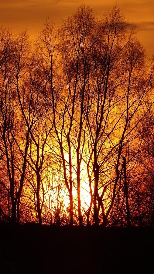foto in aard, de bomen die, de karmozijnrode zonsondergang, foto gelijk maken royalty-vrije stock foto's