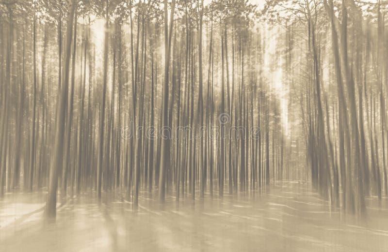 Foto abstracta borrosa del fondo del bosque con el movimiento surrealista fotografía de archivo libre de regalías