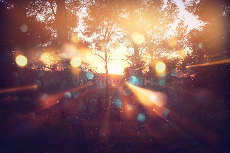 Foto abstrata borrada da explosão da luz entre árvores e luzes douradas do bokeh do brilho foto de stock royalty free