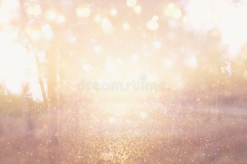 A foto abstrata da explosão da luz entre árvores e bokeh do brilho ilumina-se a imagem é borrada e filtrada fotografia de stock