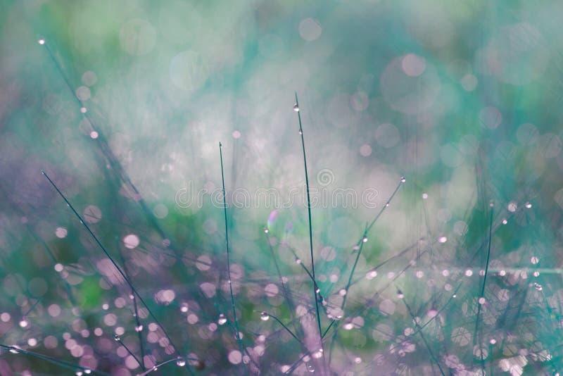 Foto abstrata de hastes longas e finas das plantas com gotas pequenas do orvalho nos footstalks e no fundo borrado da floresta e  fotografia de stock