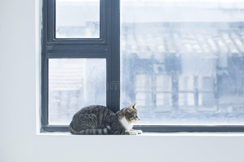 Foto adorabili di un gatto immagine stock