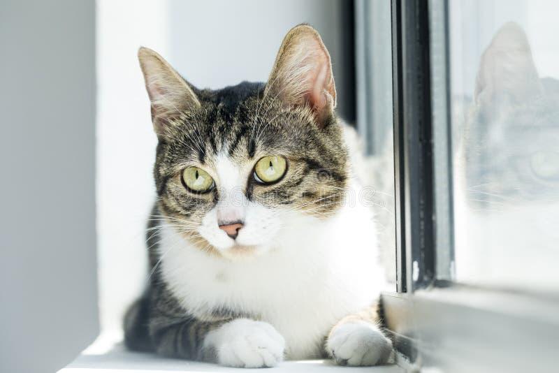 Foto adorabili di un gatto fotografia stock