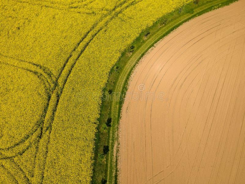 Foto aerea della colza gialla e del campo recentemente seminato con la via nel mezzo immagini stock libere da diritti