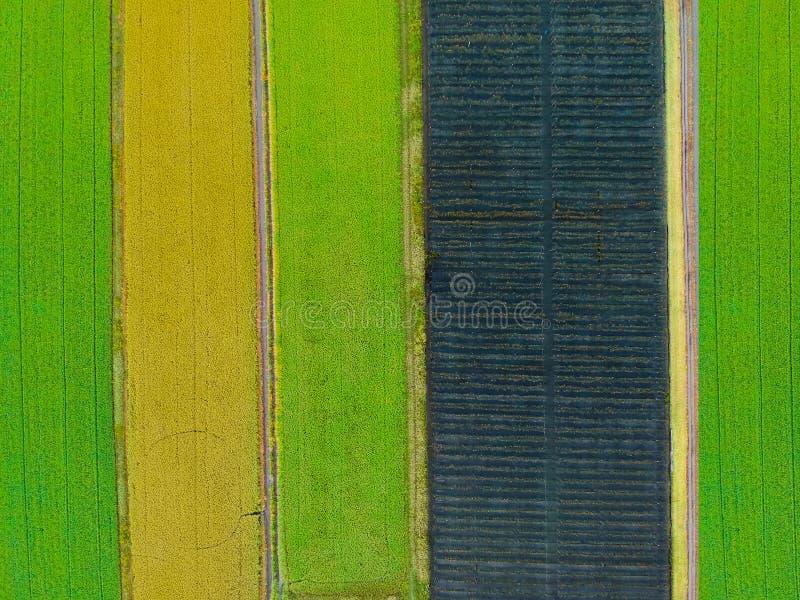 Foto aerea di vista superiore dal fuco volante di una terra con il gree seminato fotografia stock