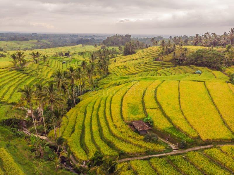 Foto aerea di vista superiore dal fuco di volo delle risaie verdi dentro fotografie stock libere da diritti