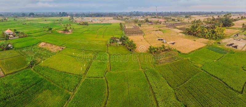 Foto aerea di vista superiore dal fuco di volo delle risaie verdi nella terra della campagna con le piante sviluppate di risaia b immagini stock libere da diritti
