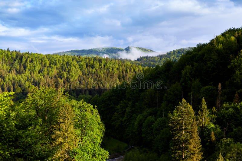Foto al aire libre del paisaje maravilloso del bosque, porciones de los árboles verdes, cielo azul con las nubes, día de verano h fotografía de archivo