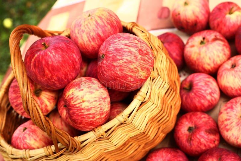 Foto alta vicina della merce nel carrello di raccolta delle mele immagini stock