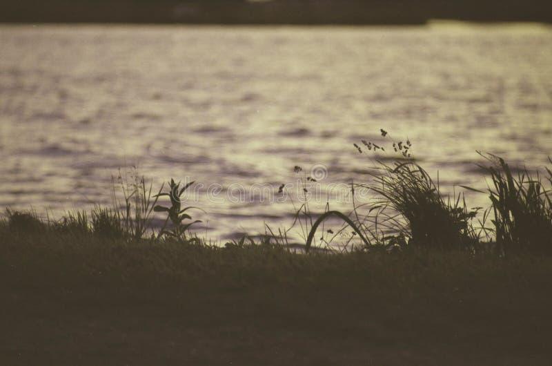 Foto analogica di contrasto basso di erba accanto ad un fiume immagine stock