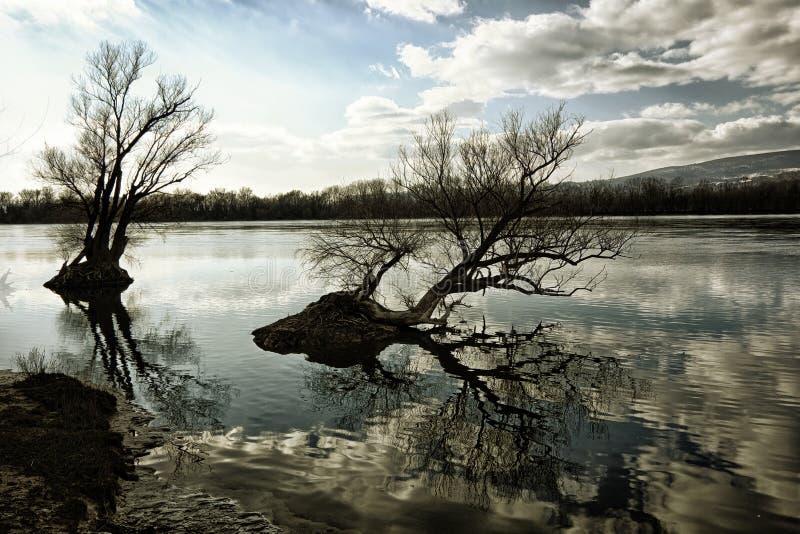 Foto artistica degli alberi nudi che riflettono su un surfa dell'acqua del ` s del fiume immagine stock libera da diritti