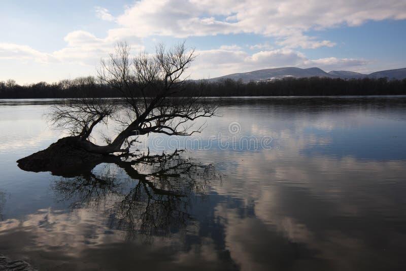 Foto artistica dell'albero nudo che riflette su un surfac dell'acqua del ` s del fiume fotografie stock