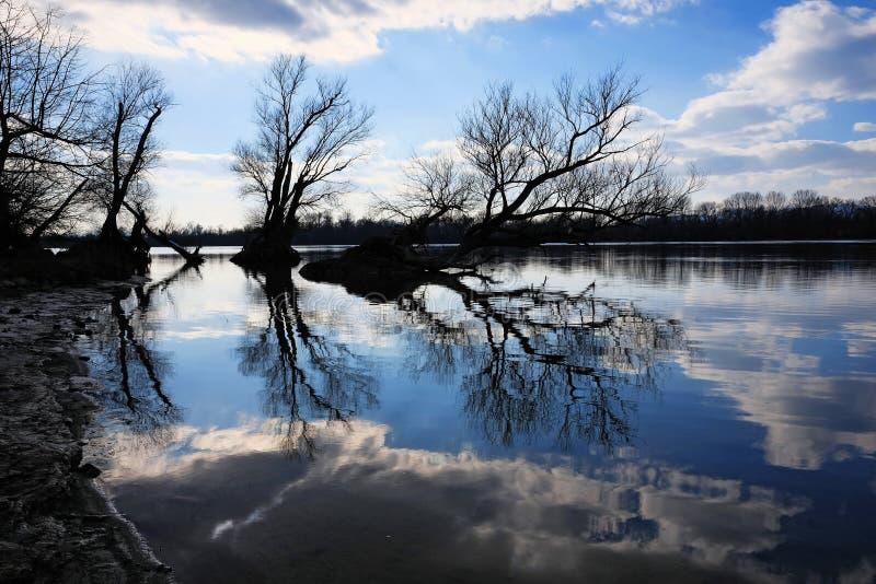 Foto artistica delle siluette nude degli alberi ad un reflec della costa del fiume fotografie stock