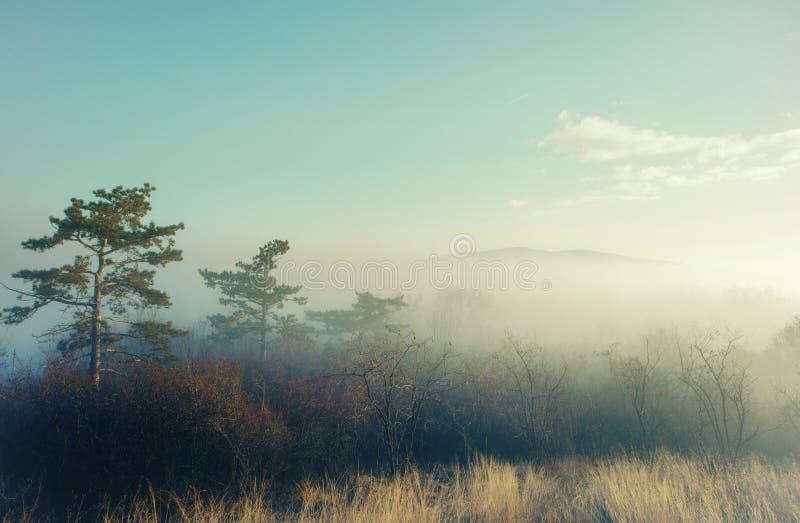 Foto artistica di un paesaggio misterioso in nebbia fotografia stock libera da diritti