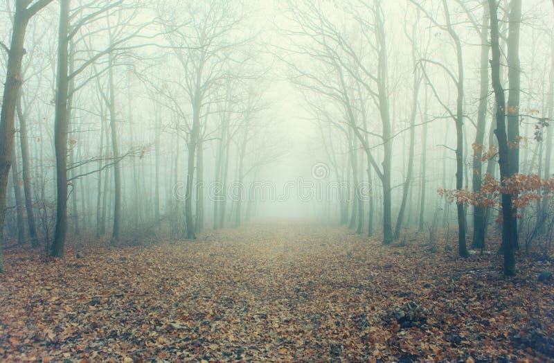 Foto artistica di un sentiero forestale nebbioso con gli alberi nudi fotografia stock