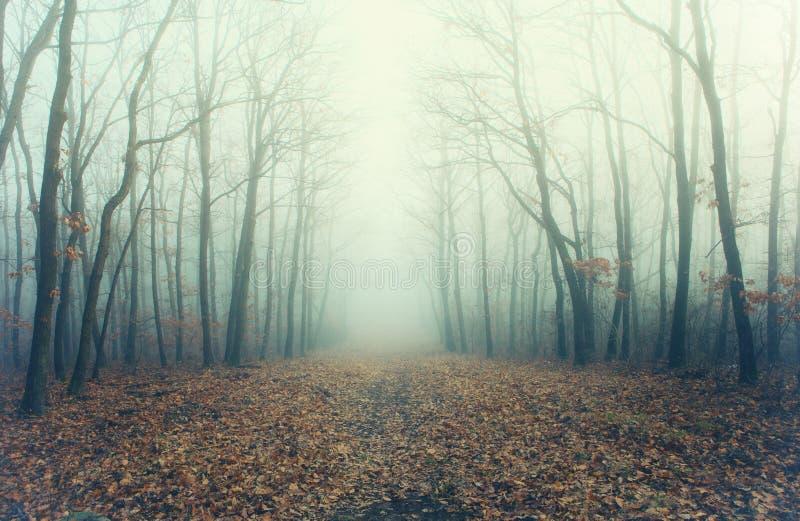 Foto artistica di una foresta misteriosa in nebbia fotografie stock libere da diritti