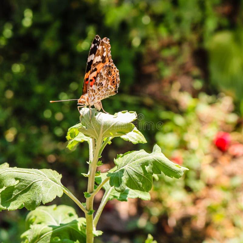 Foto ascendente cercana de una mariposa colorida que se sienta en una hoja imagen de archivo