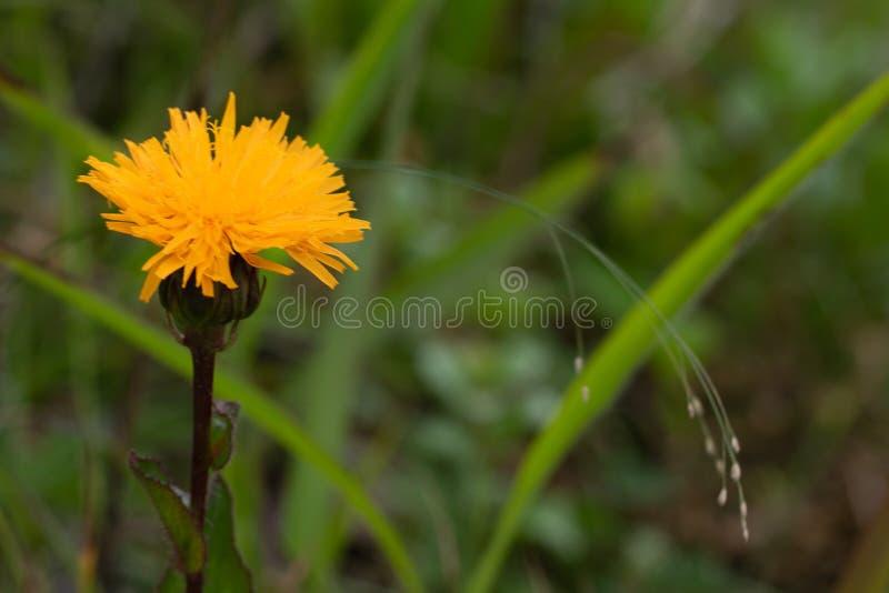 Foto ascendente próxima da flor alaranjada no foco macio imagens de stock
