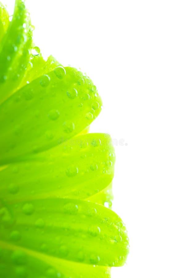 Foto astratta delle foglie verdi con le gocce di acqua fotografia stock