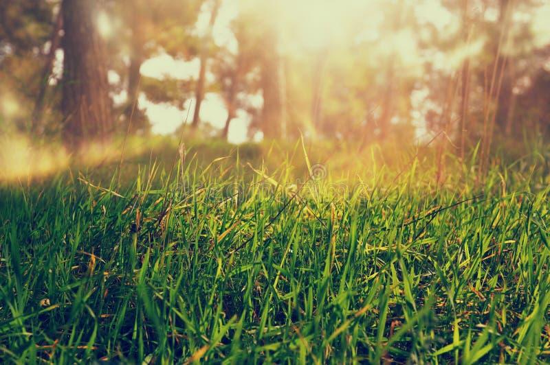 Foto astratta di luce scoppiata fra gli alberi l'immagine è filtrata fotografia stock libera da diritti