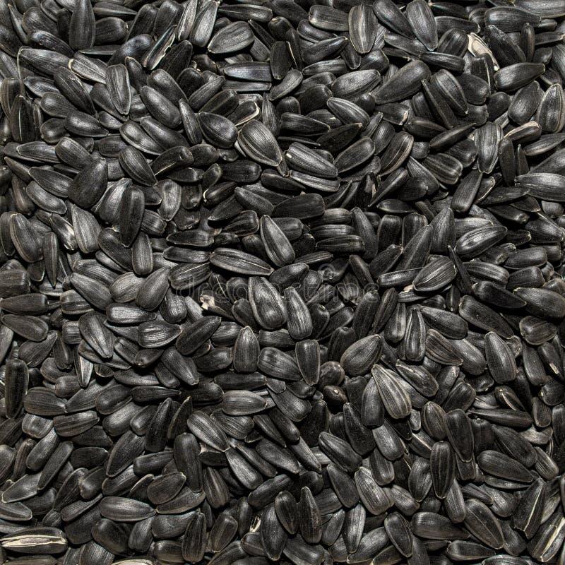 Foto av closeuptextur av svart solrosfrö, bakgrund arkivbild