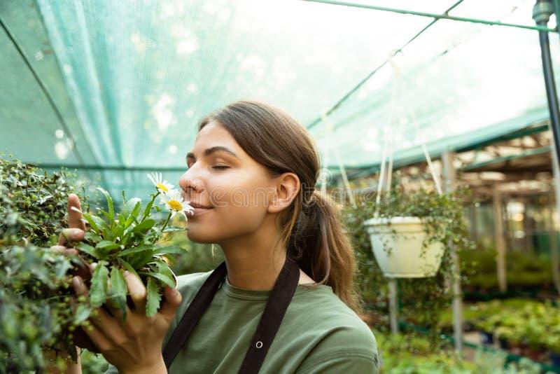 Foto av den attraktiva gulliga kvinnaträdgårdsmästaren som luktar växten royaltyfria foton