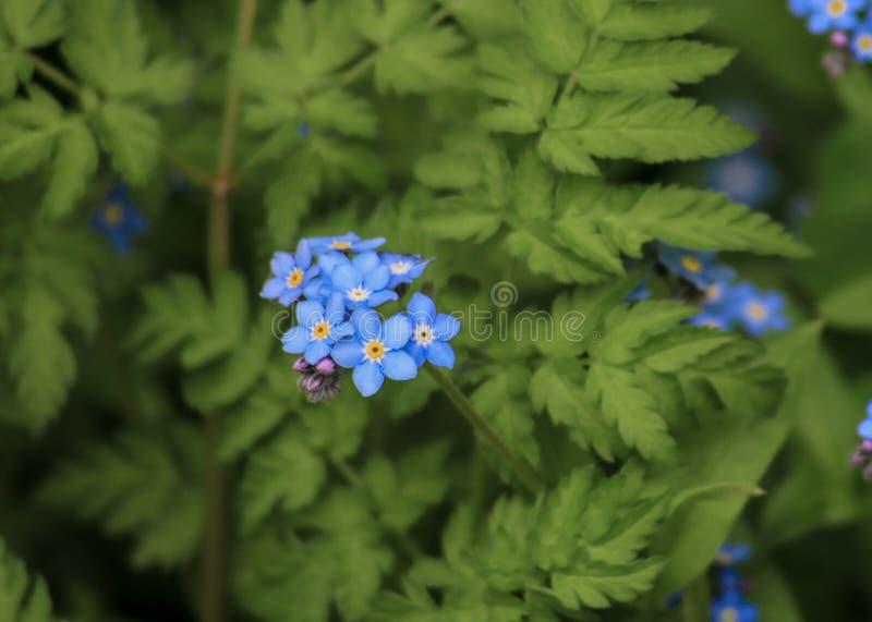 Foto av den blåa blomman arkivfoton