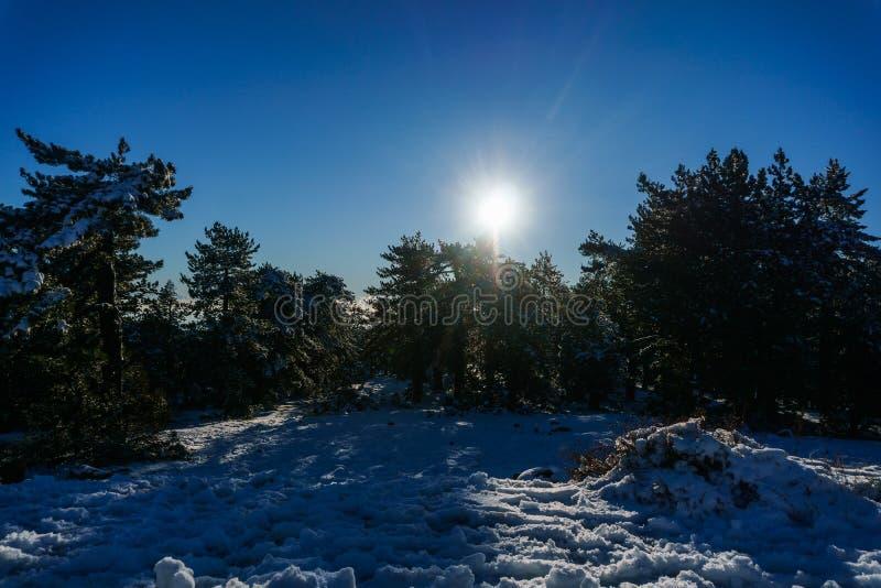 Foto av den snöig berglutningen, träd, sol royaltyfri bild