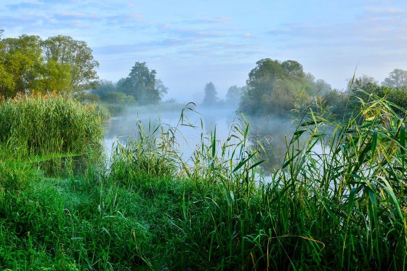 Foto av dimma över floden i morgonen arkivfoto