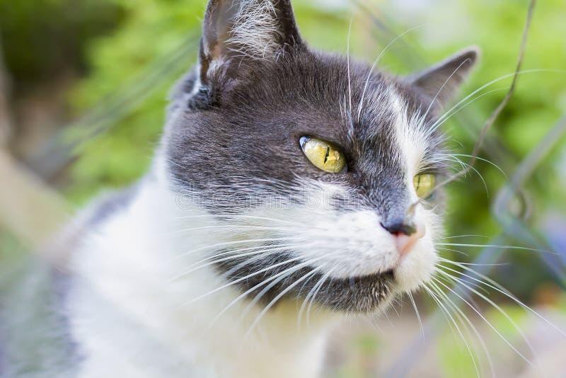 Foto av en grå katt royaltyfria foton