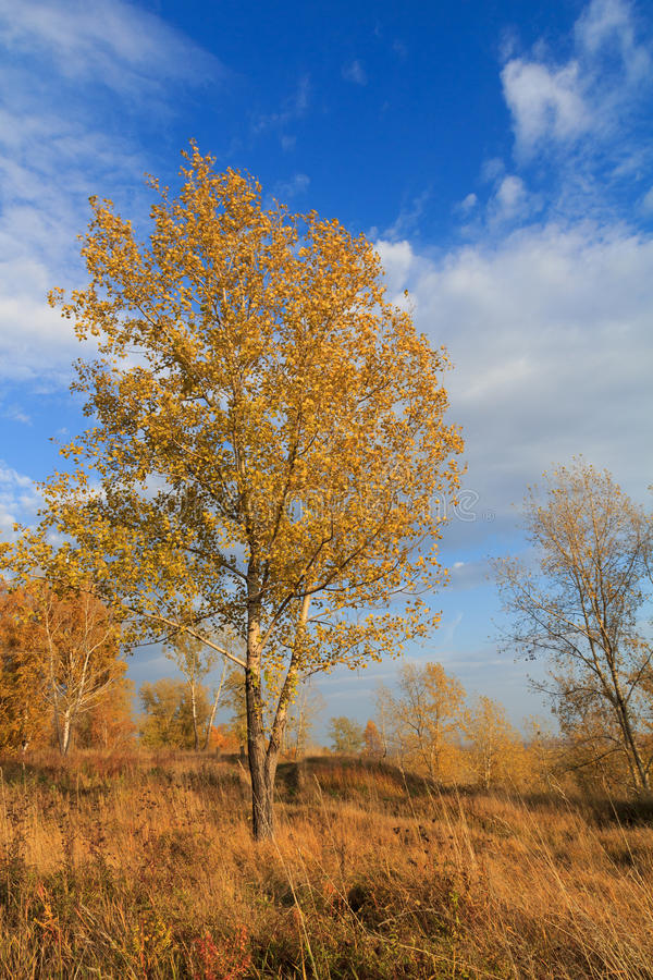 Foto av en höstskog royaltyfria foton