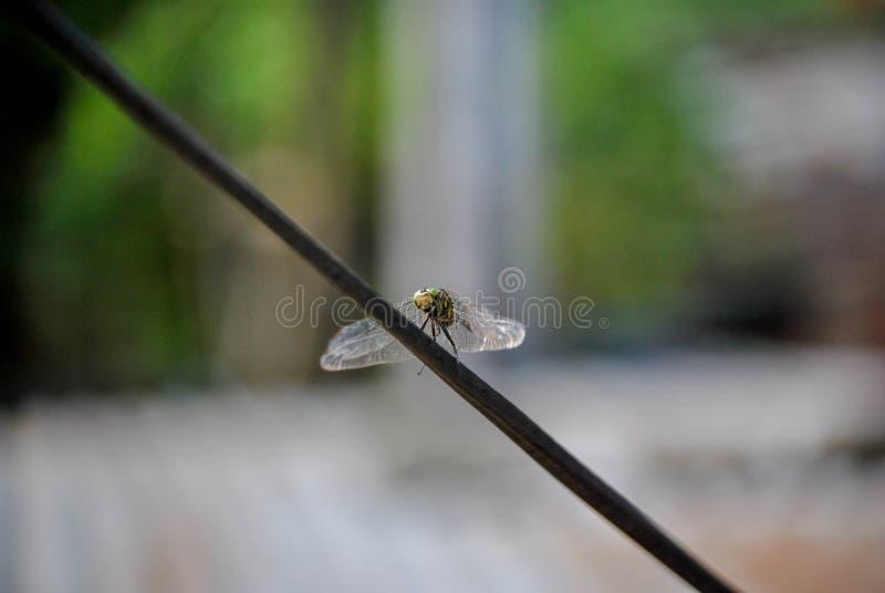 Foto av en slända som lägger på en tråd royaltyfri foto