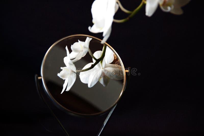 Foto av en vit orkidé royaltyfria bilder