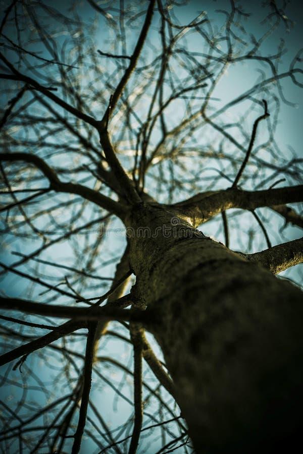 Foto av ett träd utan sidor royaltyfri fotografi