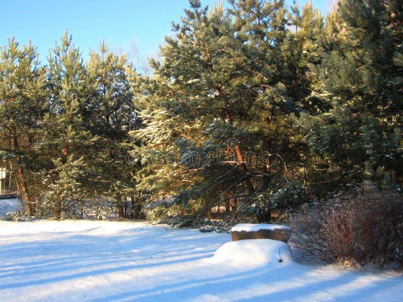 Foto av ett vinterlandskap arkivfoto