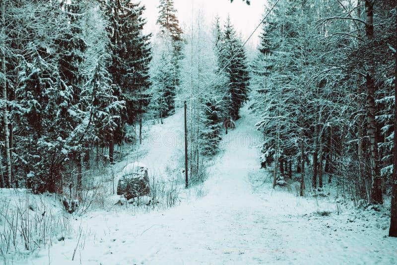 Foto av ett vinterlandskap av trät royaltyfria foton