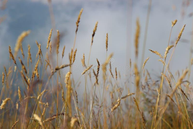 foto av gräs i bergen royaltyfri fotografi