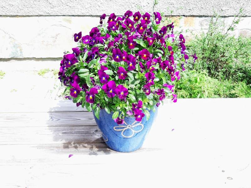 Foto av härliga purpurfärgade blommor i mycket ljust solsken royaltyfri bild